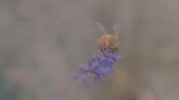 Lavender Kiss_Matthew Harper