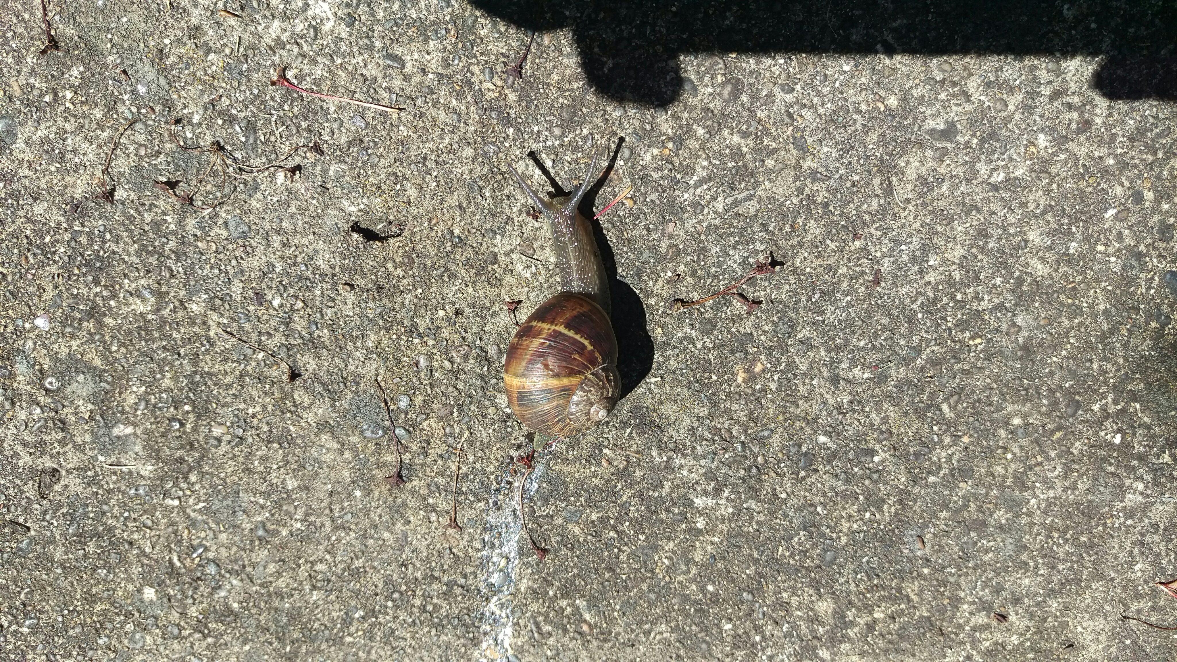 Snail Buddy