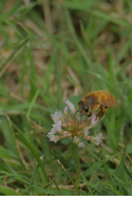 Beesiness As Usual_Matthew Harper