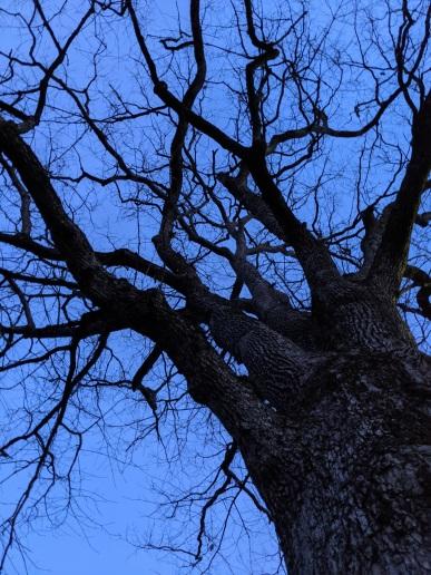 citizen-tree